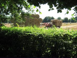 Uitzicht vanuit voortuin vakantiehuis Bourgogne Les champs de Fleury