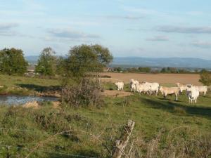 Vakantie in de Morvan Bourgogne Les champs de Fleury