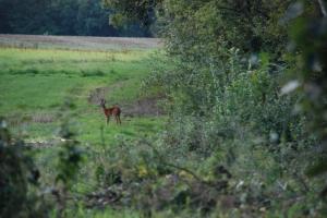 Wild in de Morvan Vakantiehuis Les champs de Fleury